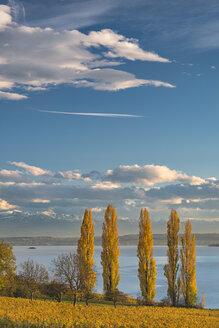 Germany, Baden-Wuerttemberg, Birnau, Lake Constance, Poplars and Saentis in autumn - SH02058
