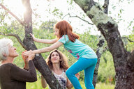Girl climbing garden tree, watched by mother and grandmother - ISF21048