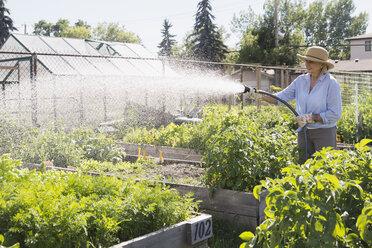 Senior woman watering vegetable garden with hose - HEROF28407