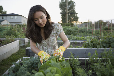 Teenage girl tending to plants in vegetable garden - HEROF28443