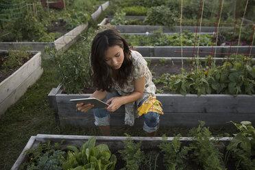 Teenage girl with digital tablet examining vegetable garden - HEROF28446