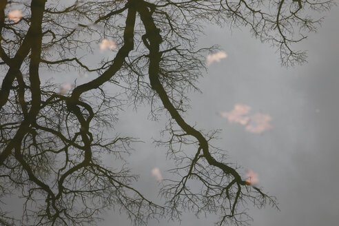 Reflection of bare tree on water surface of a lake - JTF01189
