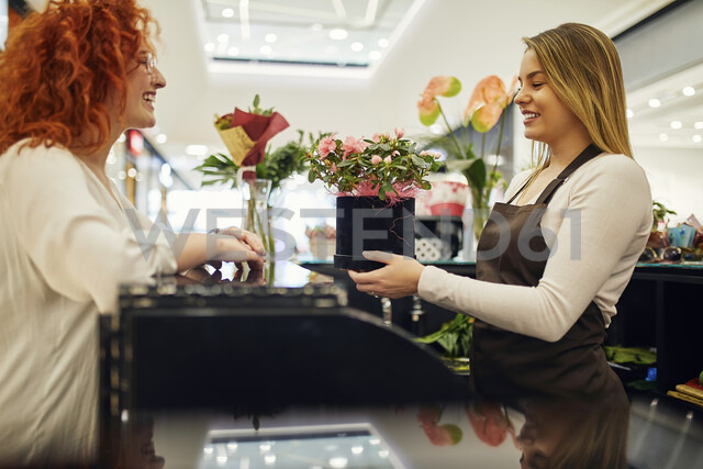 Happy customer and shop assistant with potted plant at counter in flower shop - ZEDF01987