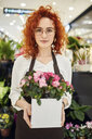 Portrait of florist holding potted plant in flower shop - ZEDF02002