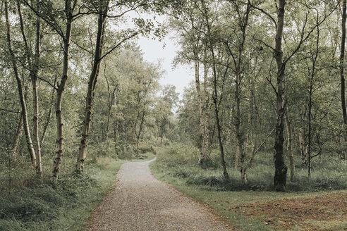Niederlande, Friesland, Schiermonnikoog - DWF00342