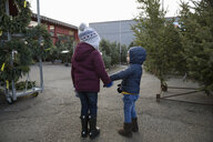 Cute brother and sister holding hands, shopping for Christmas tree at Christmas market - HEROF28529