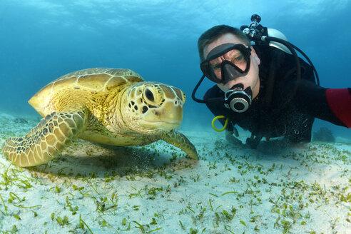 Scuba diver with Green Sea Turtle, Chelonia mydas - GNF01504