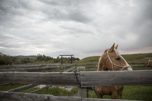 Horse looking away behind pasture fence - HEROF28813
