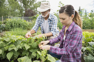 Father and daughter tending to vegetable garden - HEROF28852