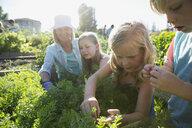 Grandmother and grandchildren tending to plants in garden - HEROF28861