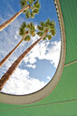 Palm Trees Through Architecture - MINF10580