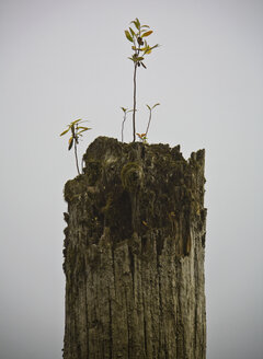 Dead Tree with Seedling - MINF10586