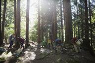 Volunteers planting trees in woods - HEROF29924