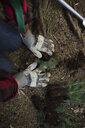 Volunteer planting tree in woods - HEROF29930