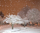 Falling Snow in a Neighborhood - MINF10984