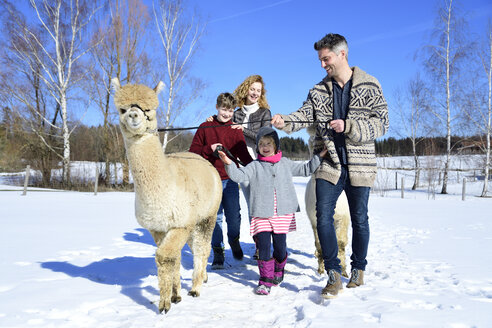 Family walking with alpaca on a field in winter - ECPF00563