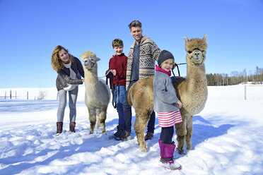 Family with alpacas on a field in winter - ECPF00566