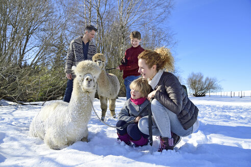 Family with alpacas on a field in winter - ECPF00569