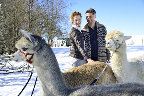 Happy couple with alpacas on a field in winter - ECPF00572