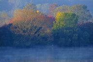 Germany, Bavaria, Ismaning reservoir, Pliening, morning mood with heron - SIEF08448