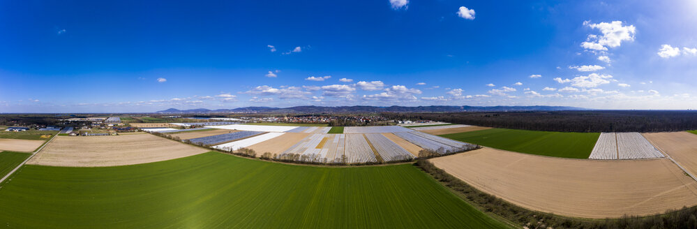 Germany, Hesse, Bergstrasse, Aerial view of asparagus field with white plane - AMF06866