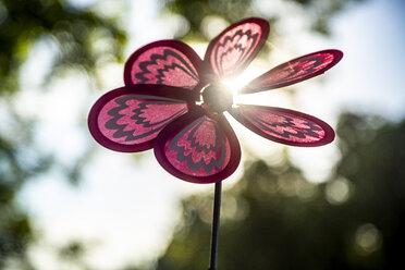 Pinwheel at backlight - SARF04179
