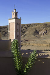 Morocco, Ounila valley, succulent plant in front of loam wall and minaret - PSTF00387