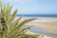 Tranquil, idyllic scene tropical palm tree and sunny ocean beach, Cacela Velha, Algarve, Portugal - FSIF03768