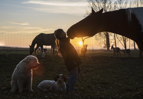 Silhouette girl and horse kissing on farm at sunset - FSIF03828