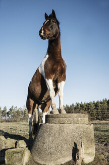 Portrait brown and white horse standing on well covering on sunny farm - FSIF03834