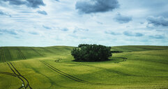 Scenic view green farmland and stand of trees, Brandenburg, Germany - FSIF03915