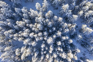 Germany, Bavaria, aerial view over snowy spruce forest - SIEF08476