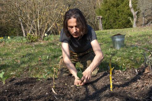 Man planting kohlrabi - NDF00866