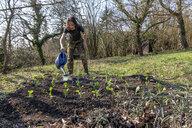 Man watering vegetable patch - NDF00869