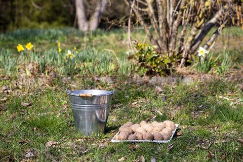 Kartoffeln, Spitzkohl, Kohlrabi pflanzen, Beet pflügen, furchen, Tiefkultur Beet, Mischkultur, Schrebergarten, Garten, DIY, Selbstversorgung, Permaculture, ökologische Landwirtschaft, Nachhaltigkeit, Naturverbundenheit, Hobby, Freude, Gesundheit, Frühling, Unterfranken, Würzburg, Deutschland - NDF00875