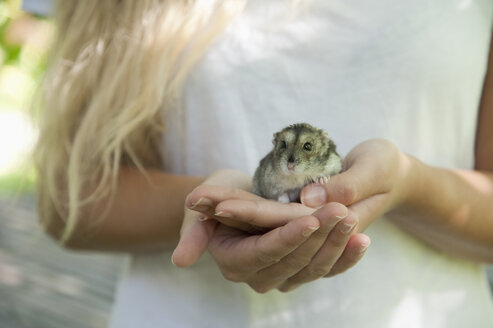 Portrait of hamster crouching in woman's cupped hand - CRF02852