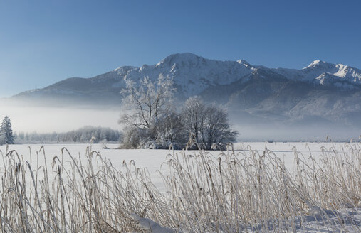 Germany, Upper Bavaria, Werdenfelser Land, winter landscape, trees and reed grass - LHF00623