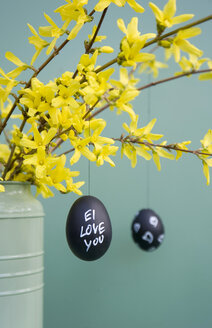 Hand-painted Easter eggs hanging from Forsythia twigs - GISF00410
