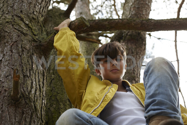 Portrait of boy climbing in tree - AMEF00050 - Antje Merkel/Westend61