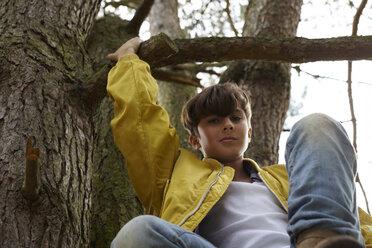 Portrait of boy climbing in tree - AMEF00050