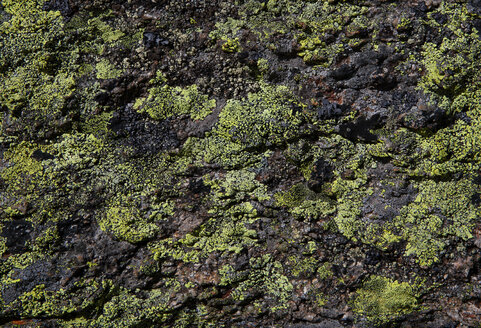 Austria, Vorarlberg, map lichen on rock - WWF04975