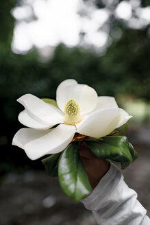 Boy's hand holding white Magnolia blossom - EYAF00087