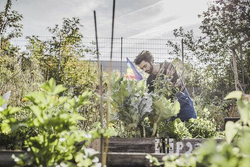 Man gardening in urban garden - VGPF00005