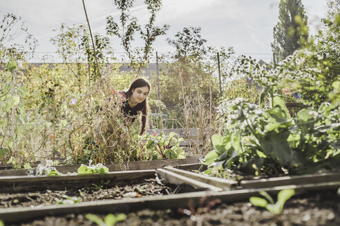 Woman gardening in urban garden - VGPF00008