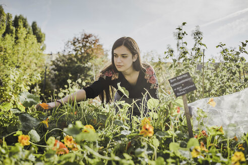 Woman gardening in urban garden - VGPF00011