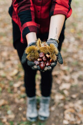 Woman with handful of chestnuts - CUF50031