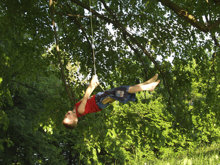 Boy swinging on a rope in tree - WWF05039