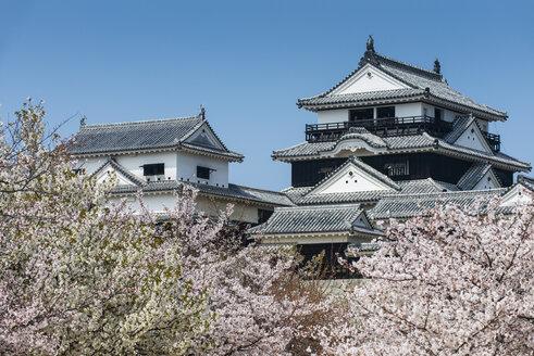 Japan, Shikoku, Matsuyama, view to Matsuyama castle at cherry blossom - RUNF01799