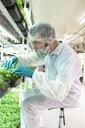 Grower inspecting cannabis seedlings in incubation - HEROF35469