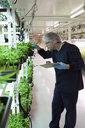 Grower inspecting cannabis seedlings in incubation - HEROF35487
